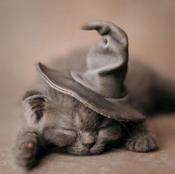 Witch_Kitten